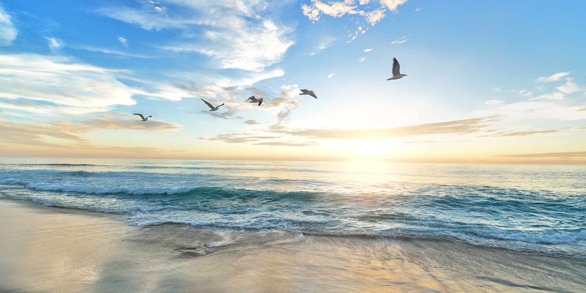 five-birds-flying-on-the-sea